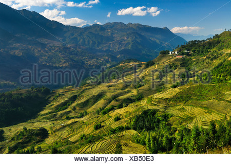 Green rice terraces, rice paddies in Sapa or Sa Pa, Lao Cai province, northern Vietnam, Vietnam, Southeast Asia, Asia - Stock Photo