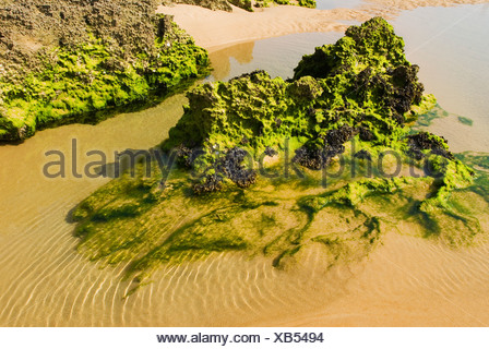 Rock formation covered with algae on a beach - Stock Photo