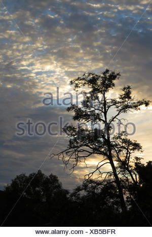 Berlin, Germany, at dusk Cirrocumuluswolken morning - Stock Photo