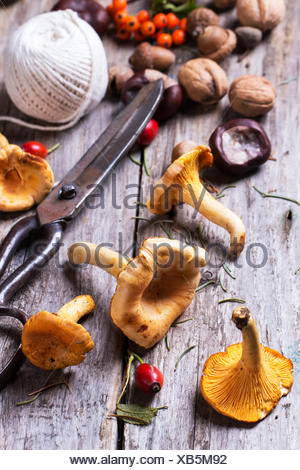 Chanterelle mushrooms, nuts and berries with vintage scissors and thread over wooden background. - Stock Photo