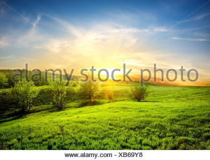 Green fields of grass - Stock Photo
