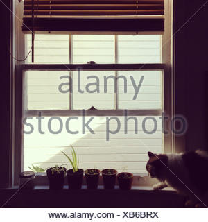 Cat on window sill with plant pots - Stock Photo