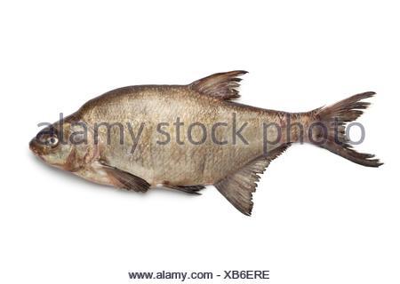 Fresh raw common bream on white background. - Stock Photo