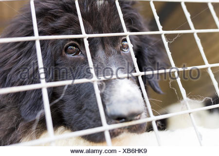 Ownerless dog in a cage - Stock Photo