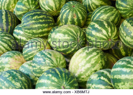 Green watermelons - Stock Photo