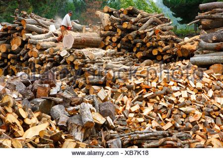 Firewood, Bio-Bio region, Chile, South America - Stock Photo