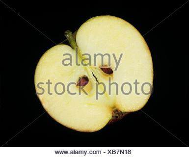 Longitudinal section through and apple to show its structure - Stock Photo