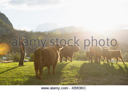 Man watching cows in sunny field on rural farm - Stock Photo