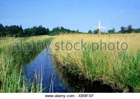 Turf Fen Drainage Mill, Windmill, Ludham, Norfolk Broads England UK English  windmills drainage tower cap mills sails marsh - Stock Photo