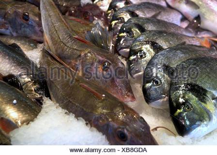 Fish sales, - Stock Photo