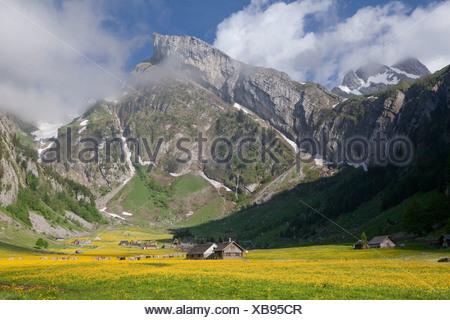 Seealp, Seealpsee, mountain, mountains, spring, canton, Appenzell, Innerroden, Appenzell area, Alpstein, Säntis, agriculture, co - Stock Photo