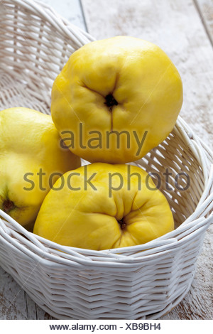 Three quinces (Cydonia oblonga) in white basket on wooden table - Stock Photo