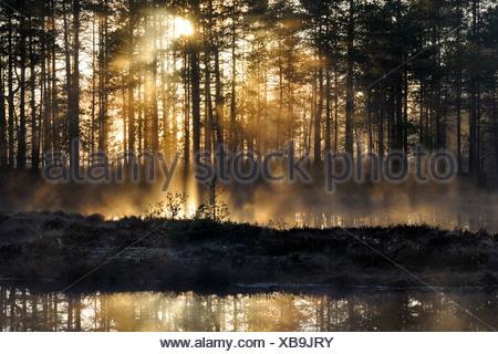 Early morning, dawn, in the swamp, Dalarna, Sweden, Scandinavia, Europe - Stock Photo