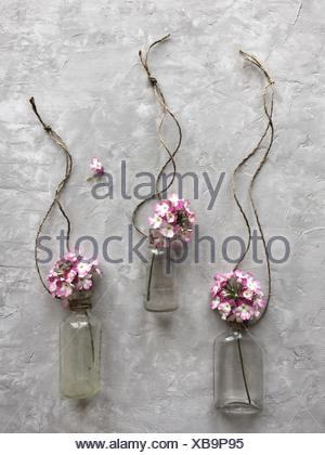 Pink flowers in antique glass bottles - Stock Photo