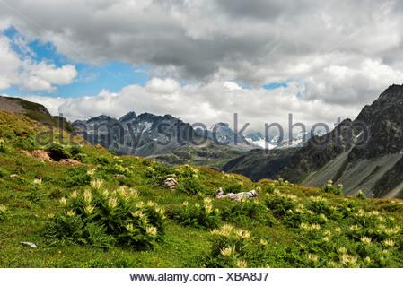 Albula, alp, shieling, pasture, Cirsium spinosissimum, thistle, Plume thistles, Engadine, Upper Engadine, sky, skye-blue, sky bl - Stock Photo