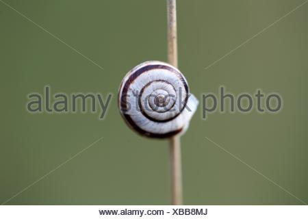Macro photo of a small snail on dry grass. - Stock Photo