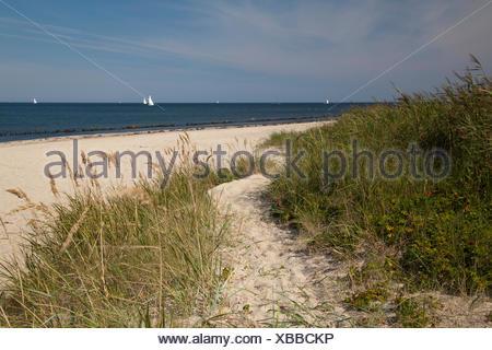Coast at the Bukspitze or Buk cape, Baltic resort Kuehlungsborn, Mecklenburg-Western Pomerania, PublicGround - Stock Photo