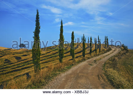 dirt road with cypresses, Tuscany, Italy - Stock Photo