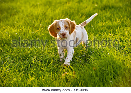 Mixed-breed dog. Puppy on a meadow - Stock Photo