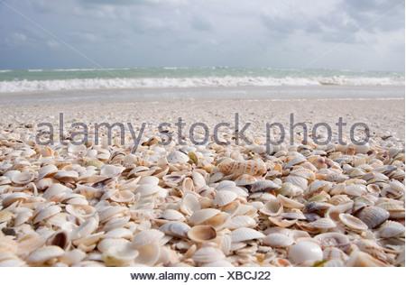 Mexico, Holbox Island, seashells covering white sand beach - Stock Photo