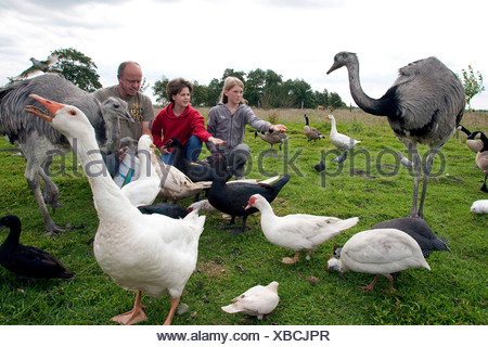 girls with keeper feeding birds in a meadow, Germany - Stock Photo