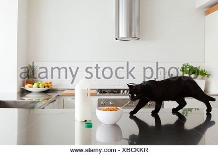 Black cat on counter with milk and cereal - Stock Photo