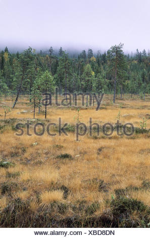 Hill moor with moor grass in fall - Stock Photo