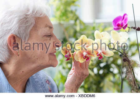 A senior woman smelling orchids - Stock Photo