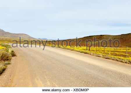 Brown and Yellow Road Leading to Tankwa Karoo - Stock Photo