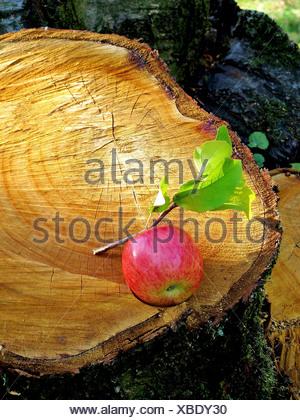 Tree, tree stump, rhizome, annual rings, apple, wood, cross section, cut, forestry - Stock Photo