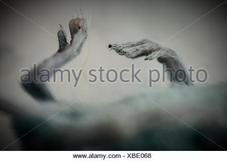 Cropped Image Of Shrew - Stock Photo