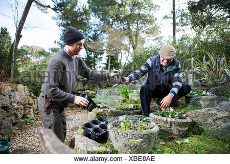 Two men planting flowers in garden, Bournemouth, County Dorset, UK, Europe - Stock Photo