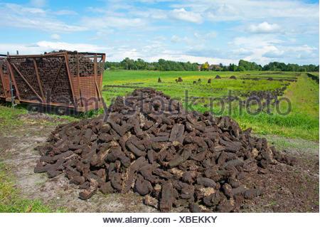 peat cutting, sods of peat, Germany, Lower Saxony, Wilhelmsfehn - Stock Photo