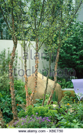 Small trees under-planted with perennials in walled urban garden with large, smooth boulder - Stock Photo