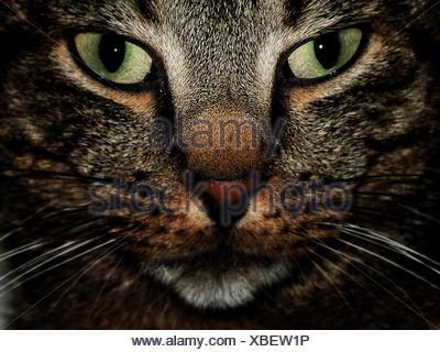 Portrait Of Cat - Stock Photo