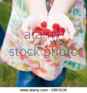 Close-up of a girl's hands holding raspberries - Stock Photo