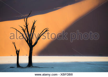 Dead acacia trees in the Deadvlei valley at sunset with red dunes in the background hit by the sunlight, Sossusvlei, Namibia - Stock Photo