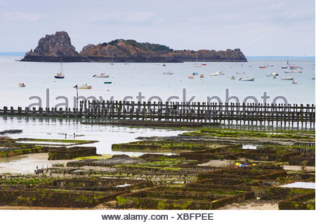 Oyster-culture in Cancale, dept Ille-et-Vilaine, Britany, France - Stock Photo