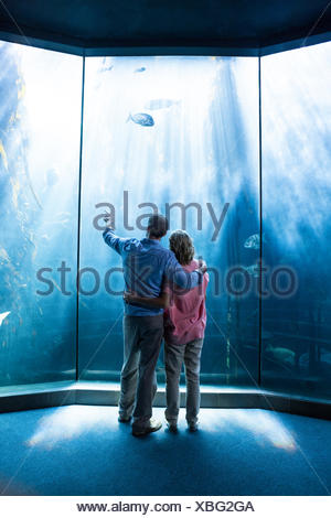 Wear view of couple looking at fish in the tank - Stock Photo