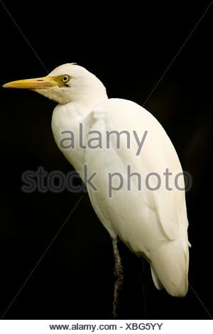 White bird against black background - Stock Photo