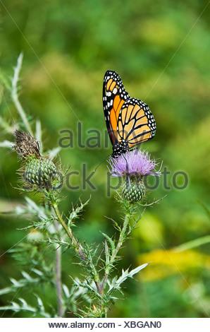 Butterfly on wildflower in meadow. - Stock Photo