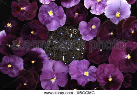 Pansy, Pansy Violet (Viola x wittrockiana, Viola wittrockiana, Viola hybrida), brooch with flowers of pansy - Stock Photo