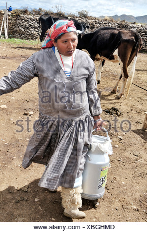 Dairy cow farming, woman with milk churn, Altiplano Bolivian highland, Oruro Department, Bolivia, South America - Stock Photo