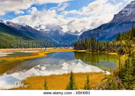 Mount Kitchener reflected in pond near Beauty Creek Hostel, Jasper National Park, Alberta - Stock Photo