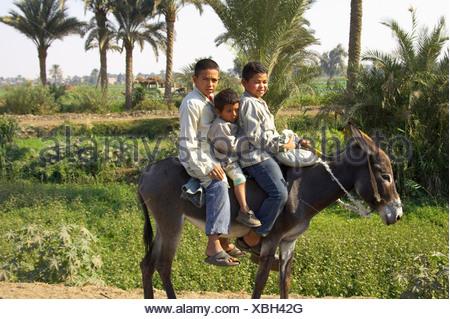 Three Egyptian Boys Riding on a Donkey in Egypt - Stock Photo