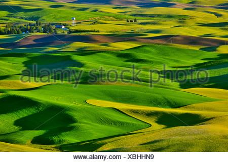 High angle view of rolling hills, Palouse, Washington State, USA - Stock Photo