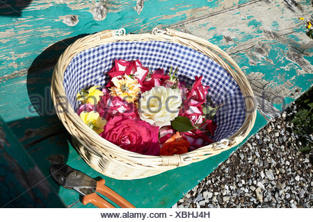 Basket of flowers on wooden bench - Stock Photo