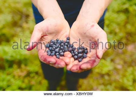 Finland, Keski-Suomi, Jyvaskyla, Handful of bilberries - Stock Photo