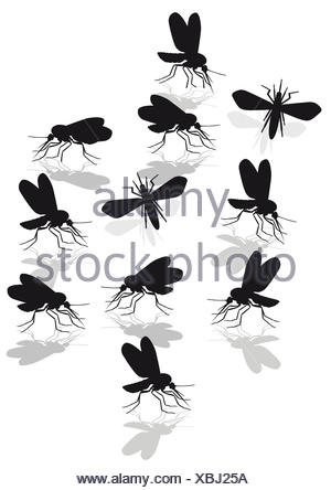 mosquitoes plague