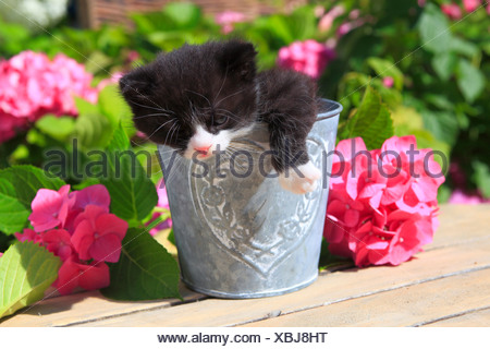 3 weeks, flower, flowers, garden, house, home, Animal, domestic animal, pet, young, cat, jug, kitten, vase, outdoors, outside, o - Stock Photo